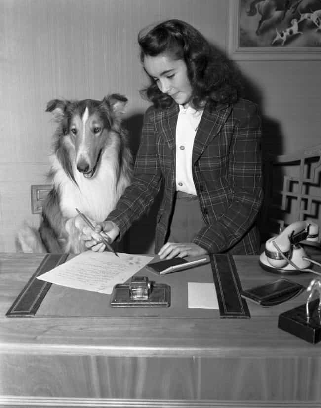Elizabeth Taylor Helps Lassie ... is listed (or ranked) 4 on the list 18 Rare Photos From The Golden Age Of Hollywood
