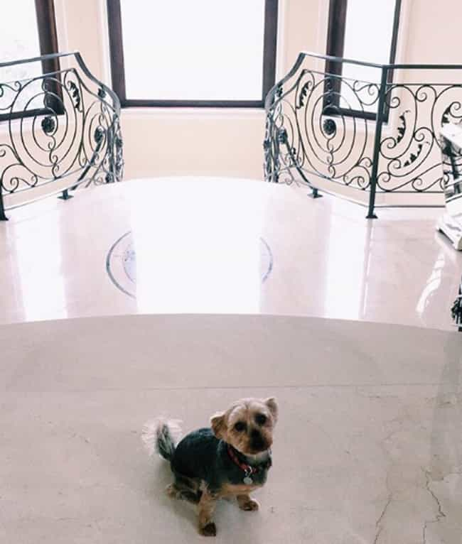 Strauss The Yorkie is listed (or ranked) 1 on the list Ariana Grande Has So Many Pets And It's Incredible