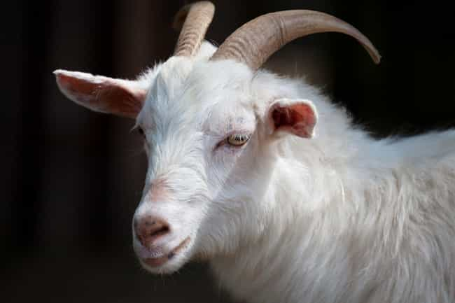 The Goat is listed (or ranked) 4 on the list All The Symbology Associated With Satan, Decoded