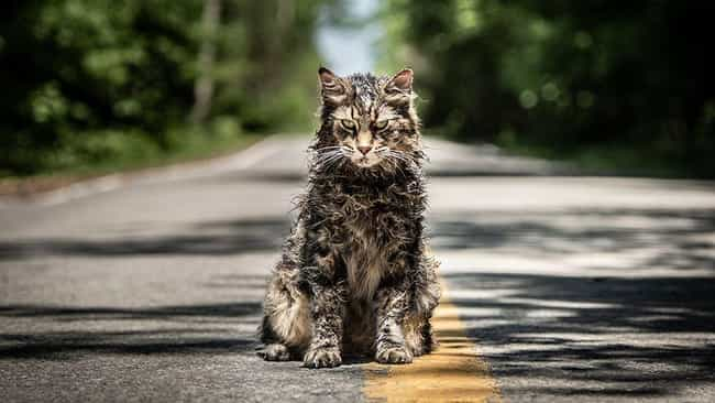 Church's First Death is listed (or ranked) 3 on the list All The Differences Between The New 'Pet Sematary' Movie and The 1983 Book