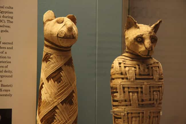 Millions Of Animal Mummies Wer... is listed (or ranked) 4 on the list Ancient Egyptians Mummified Animals, Too