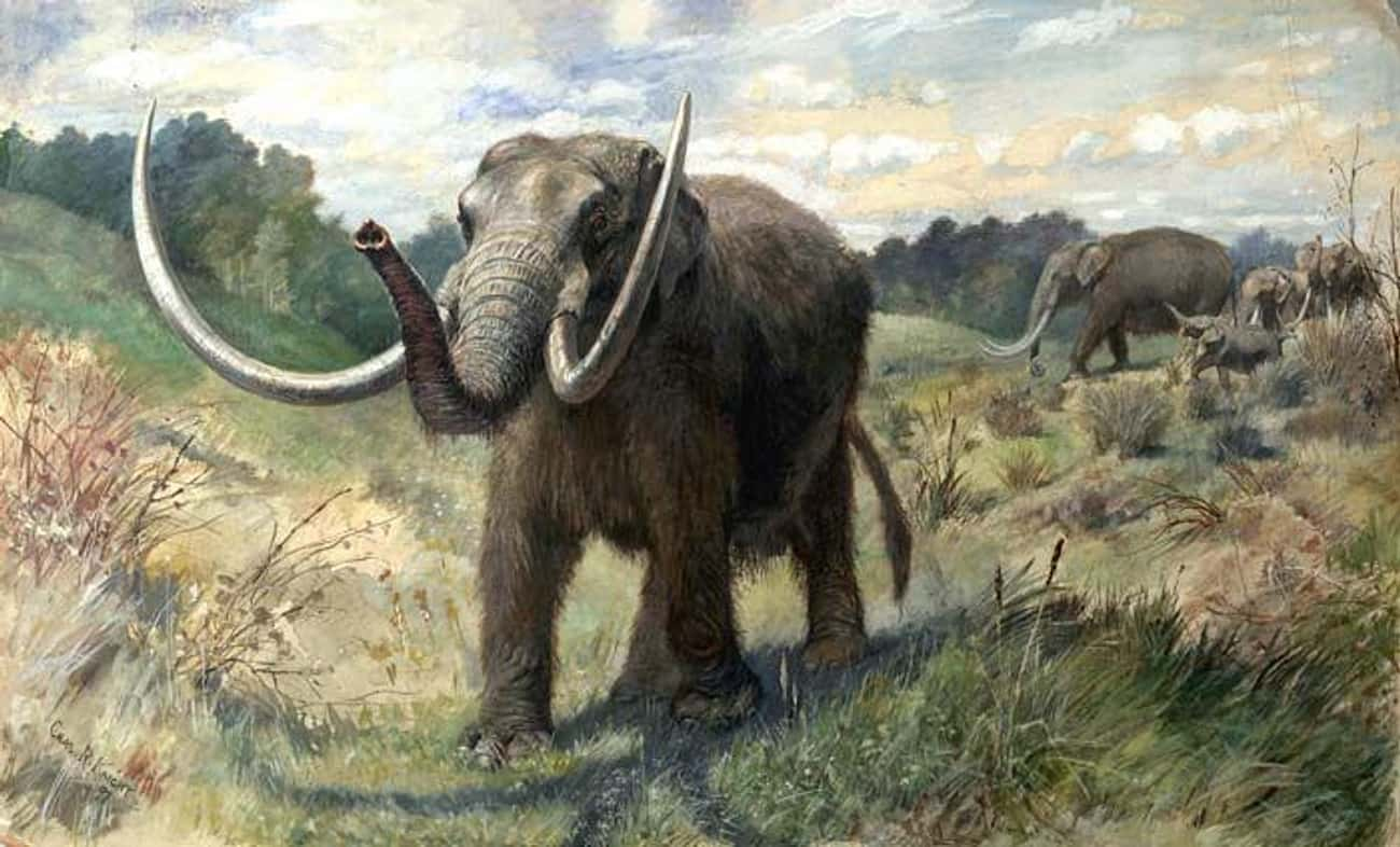 It Ate Mastodons And Early Rel is listed (or ranked) 4 on the list Meet The Giant Polar Bear-Lion Hybrid - One Of The Largest Carnivores To Ever Roam The Planet