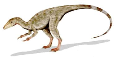 Dinosaur Plumage May Have Been is listed (or ranked) 5 on the list What Modern Scientists Think Dinosaurs Really Looked Like