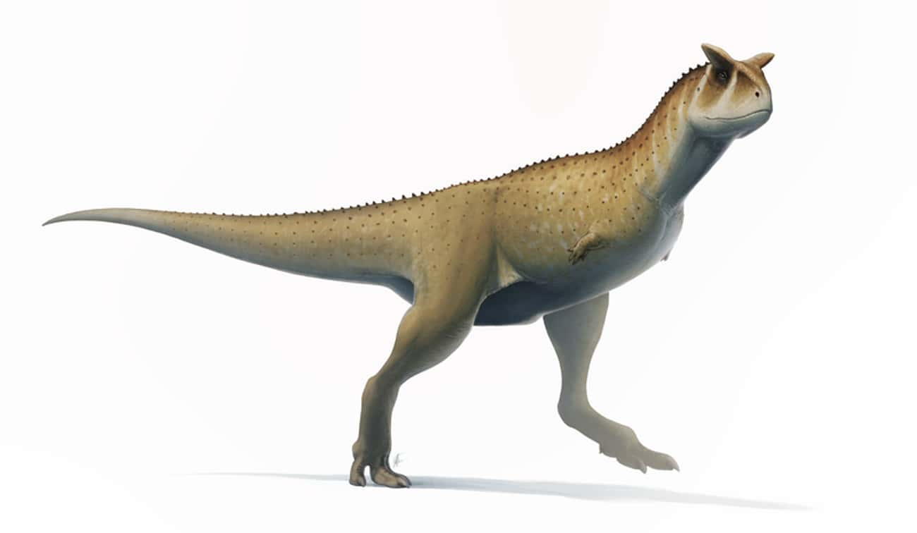 The Larger A Dinosaur Was, The is listed (or ranked) 4 on the list What Modern Scientists Think Dinosaurs Really Looked Like