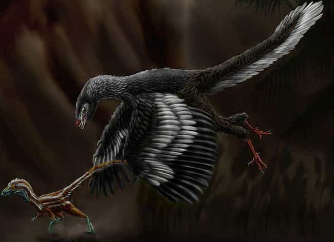 The Archaeopteryx's Anat... is listed (or ranked) 3 on the list What Modern Scientists Think Dinosaurs Really Looked Like