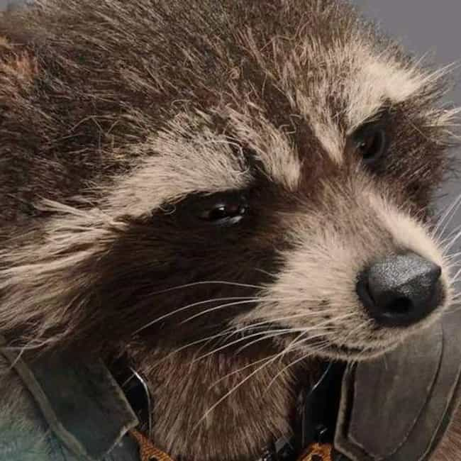 That Guy's Eye is listed (or ranked) 4 on the list The Best Rocket Raccoon Quotes