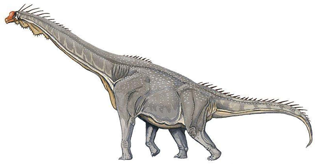 Long-Necked Dinosaurs Likely D is listed (or ranked) 2 on the list What Modern Scientists Think Dinosaurs Really Looked Like