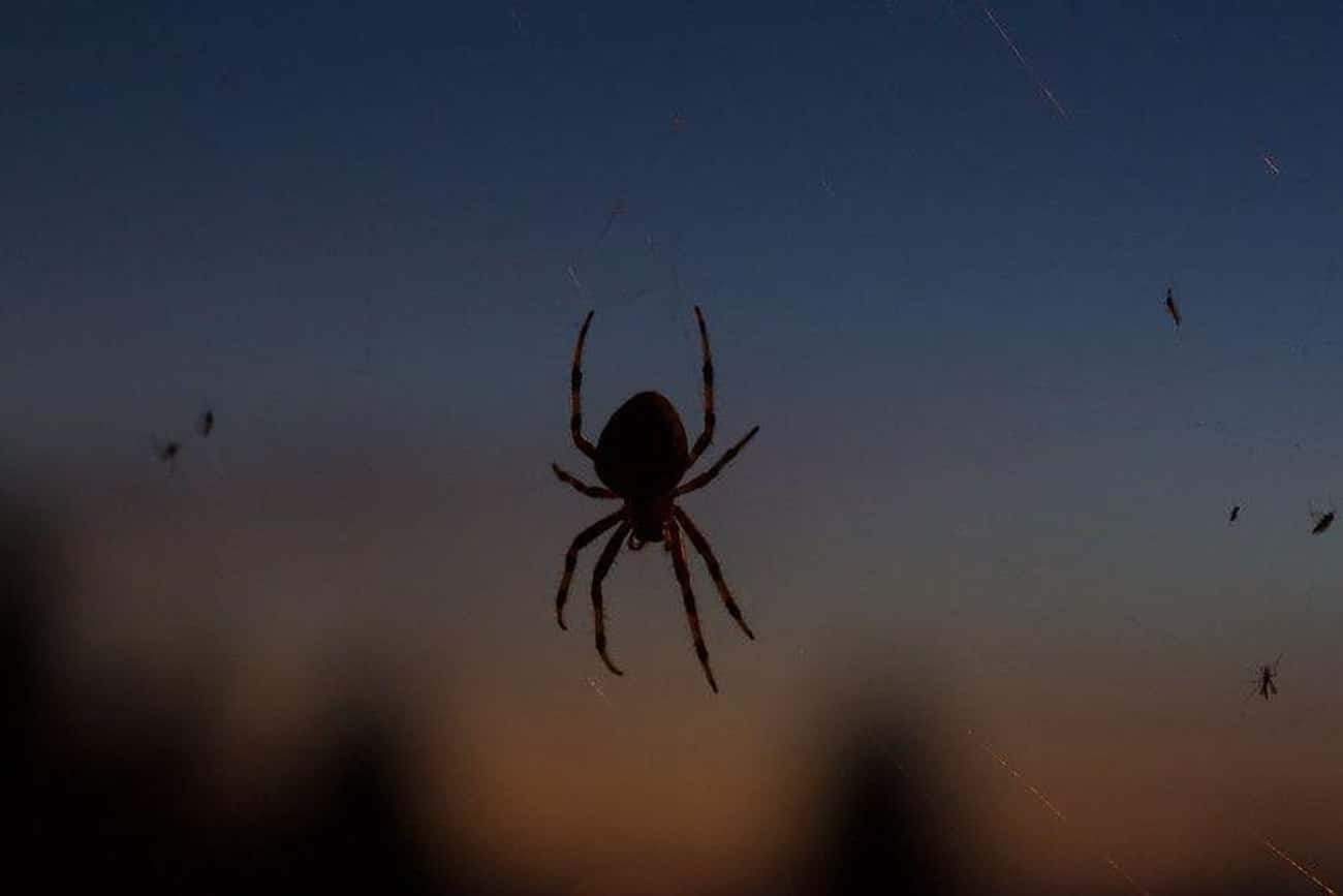 Spiders Crawl In Your Mouth Wh is listed (or ranked) 1 on the list Creepy-Crawly Myths And Urban Legends About Spiders