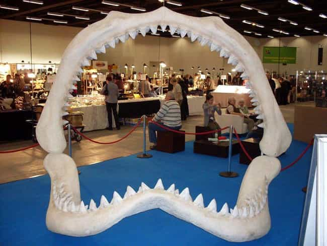 Megalodon is listed (or ranked) 1 on the list Massive Extinct Animals, Ranked By How Horrifying They Are