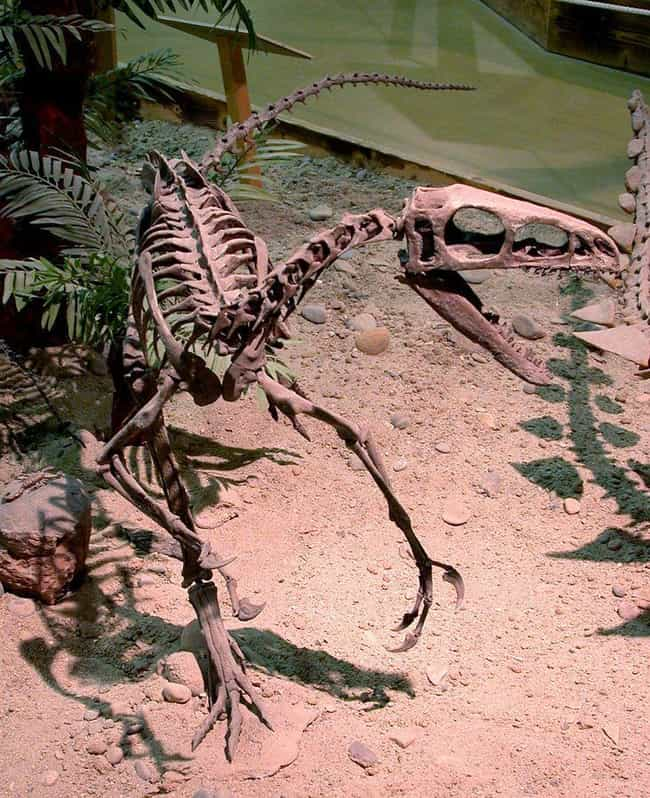 Scientists Discovered An Unusu... is listed (or ranked) 1 on the list Here Are All The Craziest Dinosaur Facts That Have Been Discovered Since You Were In School