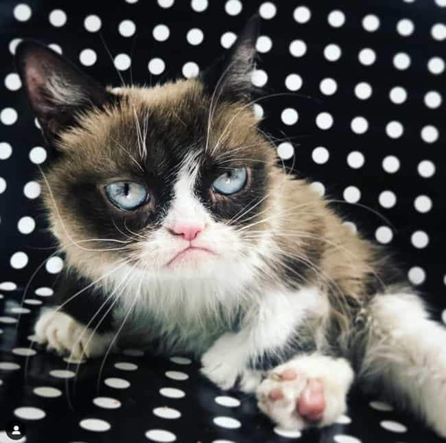 Grumpy Cat is listed (or ranked) 2 on the list Celebrities Who Died in 2019