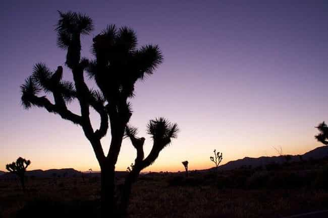 The Yucca Man Hides Amon... is listed (or ranked) 4 on the list Creepy Stories And Legends From The Mojave Desert