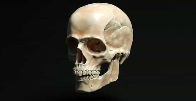 A 210,000-Year-Old Skull... is listed (or ranked) 7 on the list The Greatest Scientific Breakthroughs Of 2019