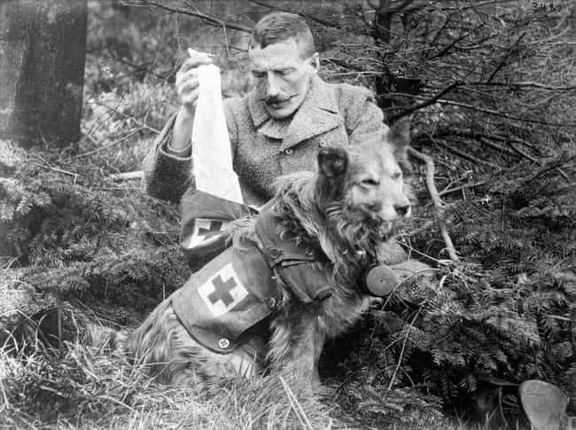 A British Medical Dog Su... is listed (or ranked) 3 on the list We Found The Best Historical Photos Of Dogs With Jobs