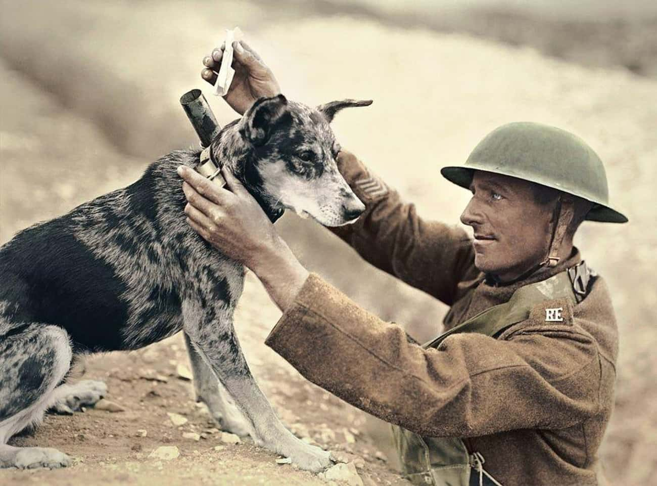 A Messenger Dog Receiving Mail is listed (or ranked) 1 on the list We Found The Best Historical Photos Of Dogs With Jobs