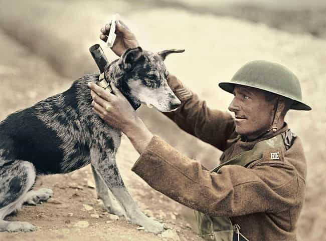 A Messenger Dog Receivin... is listed (or ranked) 1 on the list We Found The Best Historical Photos Of Dogs With Jobs
