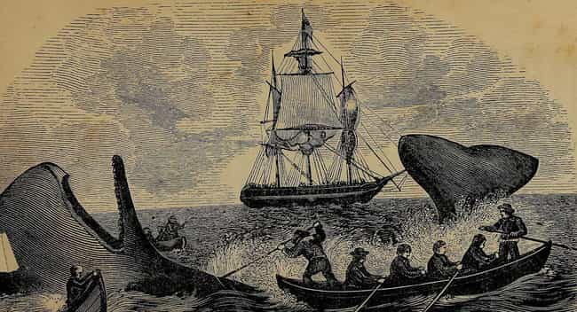 Some Ships May Have Made... is listed (or ranked) 3 on the list What Was Hygiene Like On Pirate Ships?