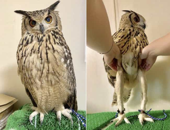 This Owl Ignored Leg Day is listed (or ranked) 1 on the list These 16 Pics Are Totally Random, But Every One Of Them Made Us Laugh