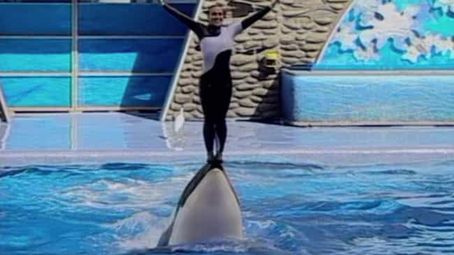A Former SeaWorld Trainer Invo... is listed (or ranked) 2 on the list All The Fallout From The 'Blackfish' Documentary