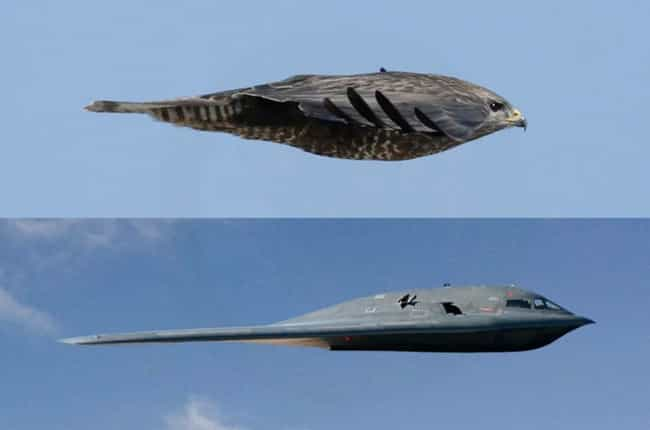 This Look At A Falcon And Stea... is listed (or ranked) 2 on the list 20 Interesting Pictures That Will Make You Say 'Huh'