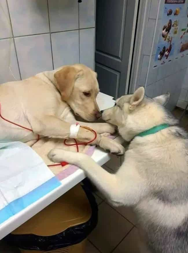 This Dog That Comforts Sick Pa... is listed (or ranked) 3 on the list 17 Photos We Found Online That Will Make Your Week A Little Better