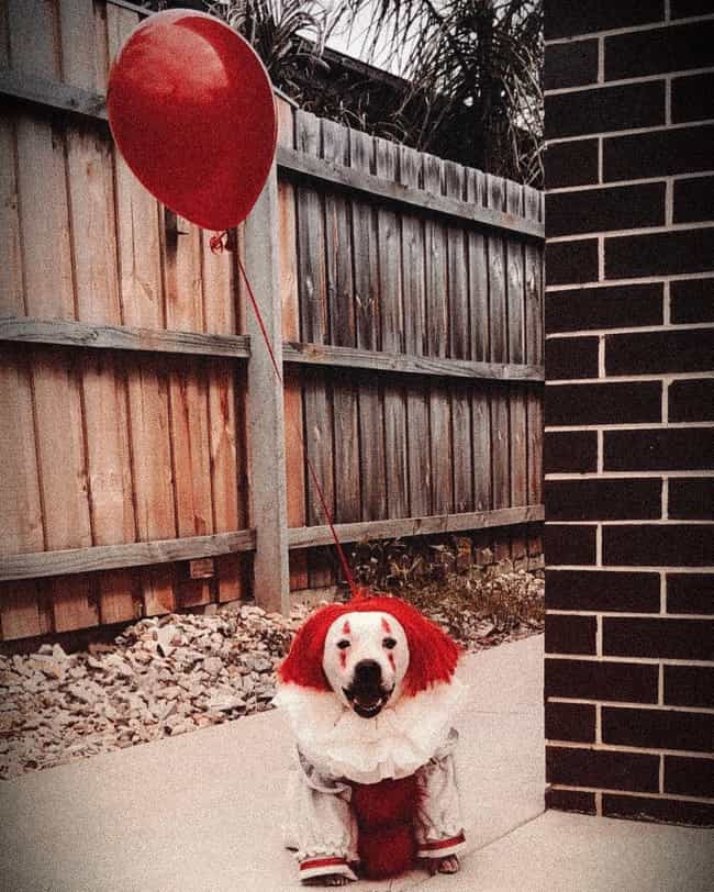 Pennywise As A Puppy is listed (or ranked) 3 on the list The Best 'IT' Halloween Costumes