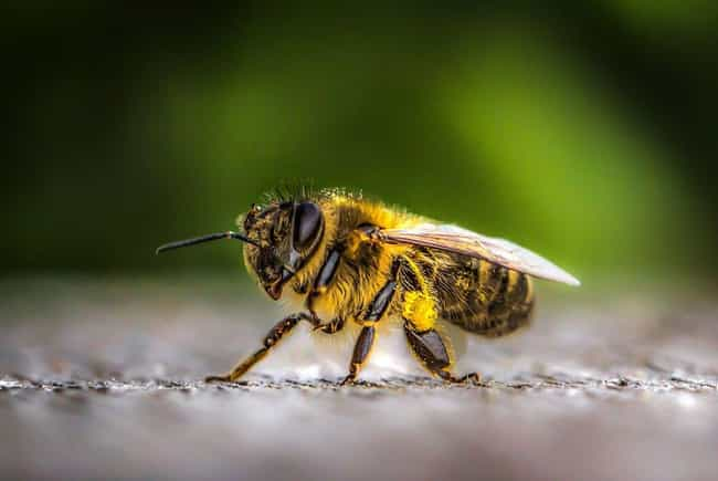 Bees Are Declared The Mo... is listed (or ranked) 5 on the list The Greatest Scientific Breakthroughs Of 2019