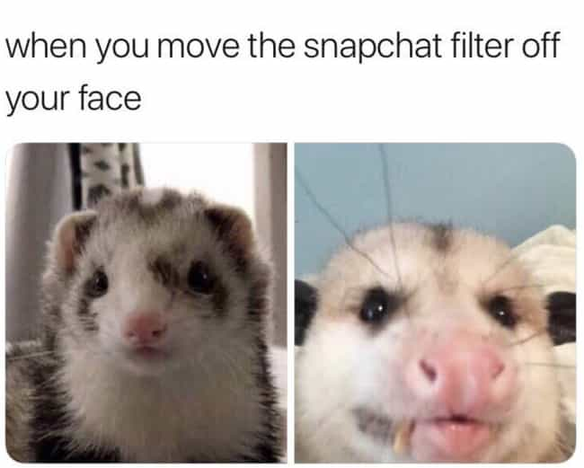 Rude Awakening is listed (or ranked) 3 on the list 20 Possum Memes You Had No Idea You Needed