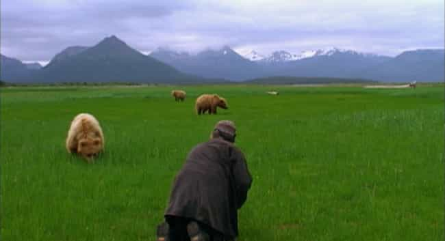 Treadwell Had Recently Stopped... is listed (or ranked) 4 on the list Everything That Had To Go Wrong For 'Grizzly Man' Timothy Treadwell To Meet His Fate