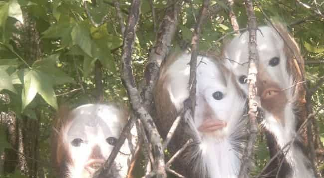Cursed Observers is listed (or ranked) 4 on the list 19 Random Images That Will Haunt Your Dreams (Seriously, They're Weirdly Disturbing)