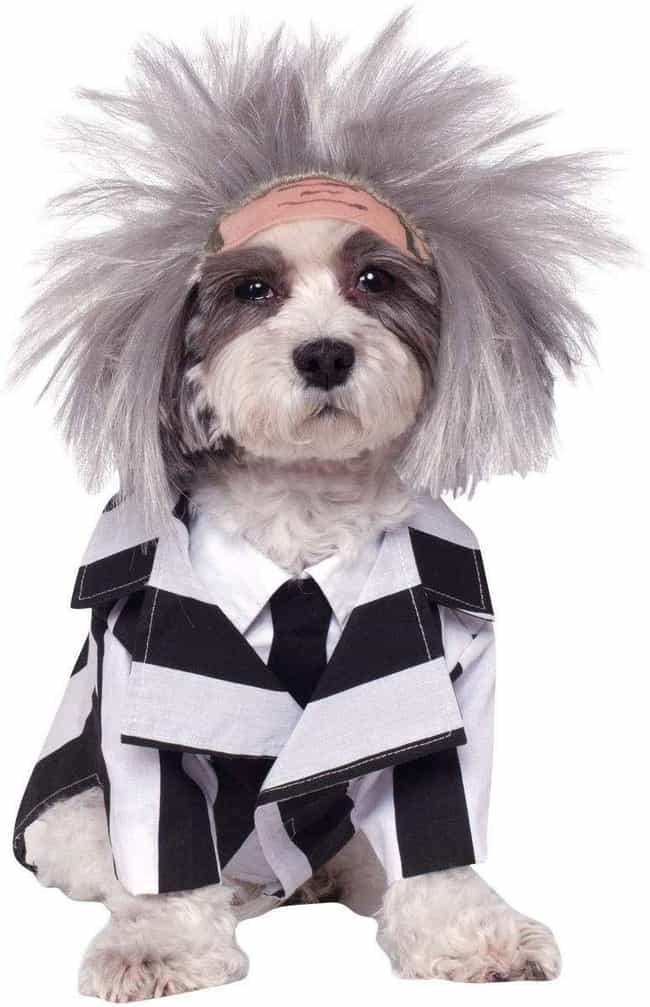 Beetlejuice is listed (or ranked) 4 on the list Spooky Halloween Costumes For Your Little Hell Hounds