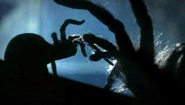 The General Mates With A... is listed (or ranked) 4 on the list The Super-Spiders Of 'Arachnophobia' Are The Unsung Eight-Legged Slashers Of 1990s Cinema