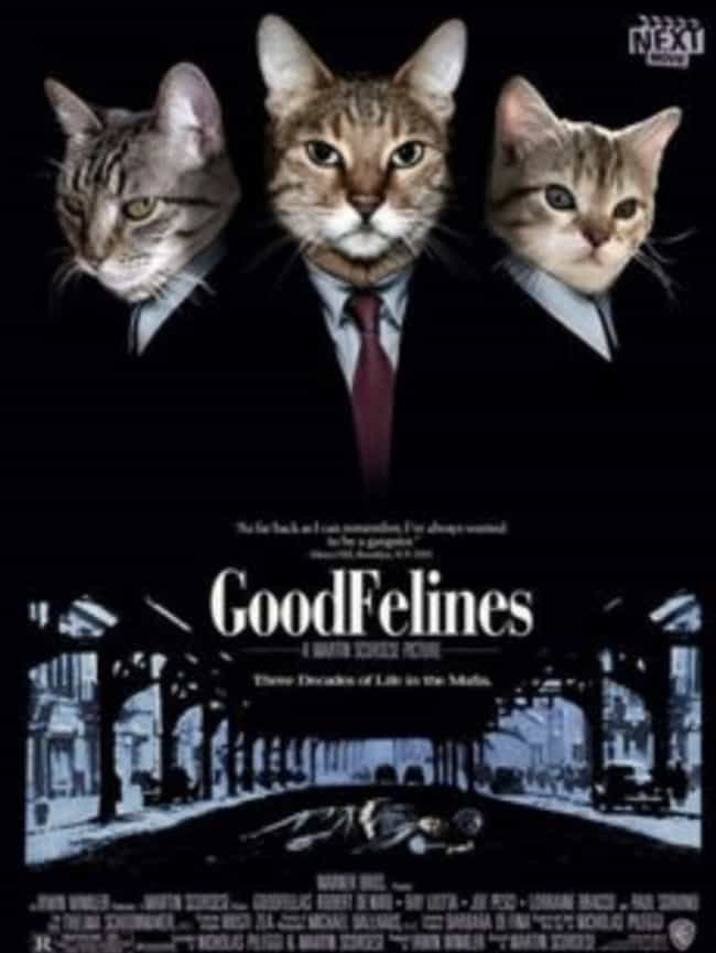 GoodFelines is listed (or ranked) 3 on the list 19 Cat Movie Posters For Films That Actually Seem Like They'd Be Pretty Good