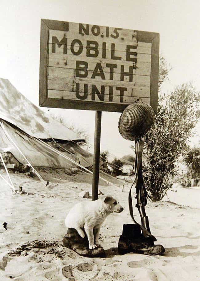 To Keep Camps Hygienic, The US... is listed (or ranked) 2 on the list What Was Hygiene Like For US Soldiers In WWII?