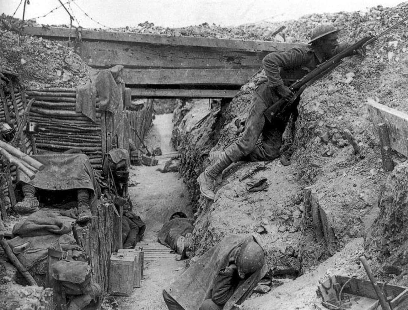 The French Army Released Cats  is listed (or ranked) 3 on the list What Was Hygiene Like For Soldiers In WWI Trench Warfare?