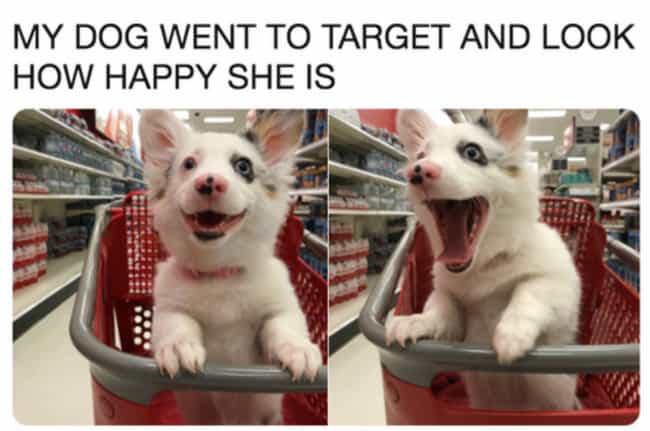 Happy Place is listed (or ranked) 2 on the list 25 Memes For People Who Prefer Dogs Over Children