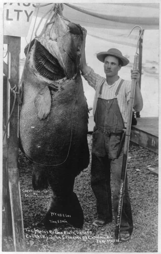 The 1905 Black Sea Bass ... is listed (or ranked) 2 on the list 16 Inspiring Photos Of Historical Record Setters