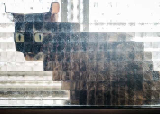 Stuck is listed (or ranked) 3 on the list 21 Times Cats Stood Behind Pixelated Windows And Got Even Cuter