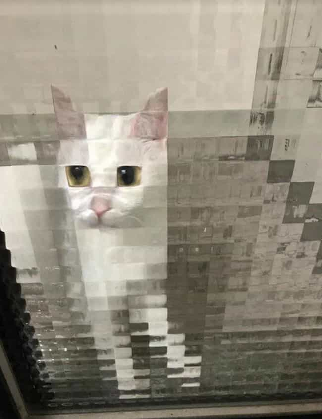 Disney Eyes is listed (or ranked) 4 on the list 21 Times Cats Stood Behind Pixelated Windows And Got Even Cuter