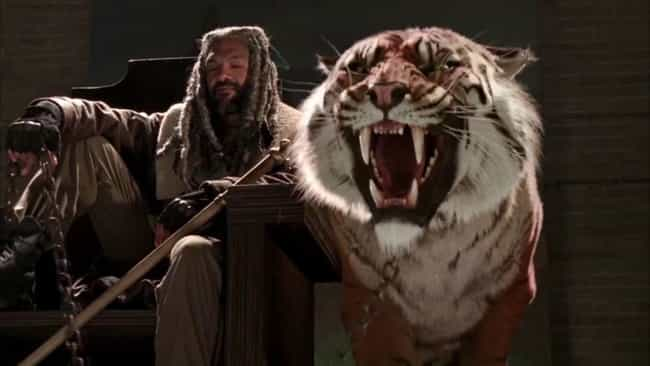 Shiva The Tiger Is Just A Stun... is listed (or ranked) 4 on the list Special Effects Secrets From Behind The Scenes Of 'The Walking Dead'