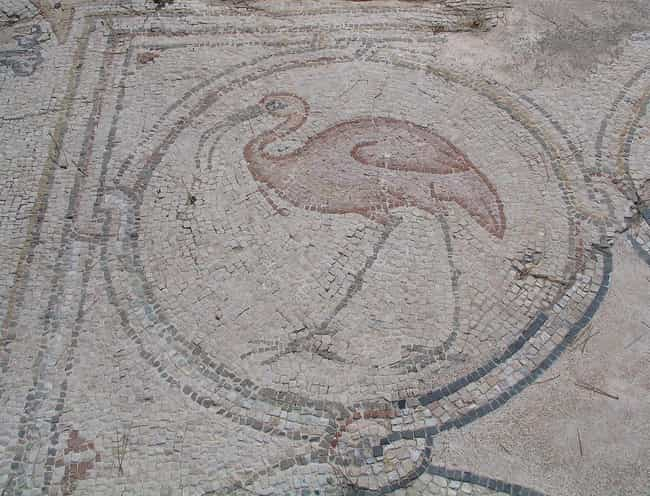 Braised Flamingo is listed (or ranked) 1 on the list What Were Foodies Eating At The Peak Of The Roman Empire?