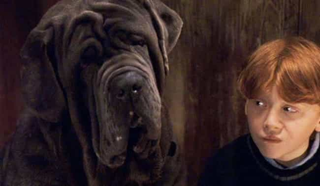 Fang is listed (or ranked) 4 on the list Every Single Harry Potter Pet, Ranked