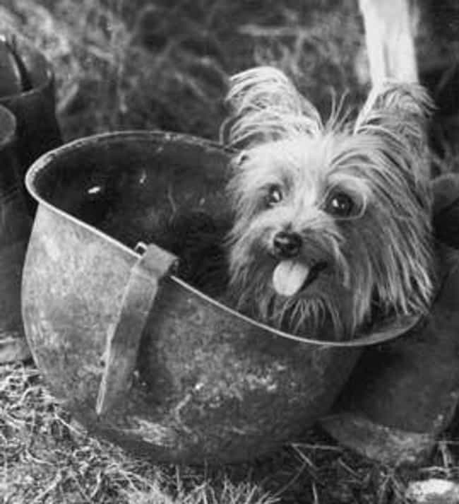 Smoky The Dog Relaxing I... is listed (or ranked) 6 on the list 20 Photographs From History Guaranteed To Make You Smile