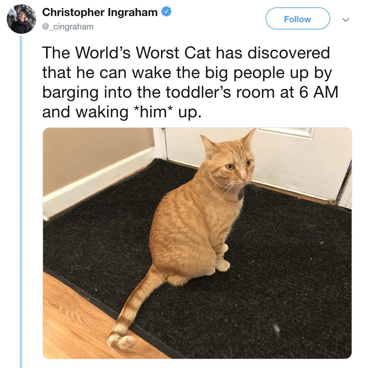 Image of Random Internet Weighs In On Who Actually Has World's Worst Cat