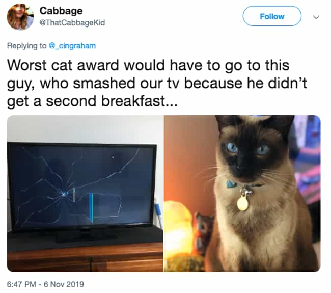 Breakfast Is The Most Importan... is listed (or ranked) 2 on the list The Internet Weighs In On Who Actually Has The World's Worst Cat