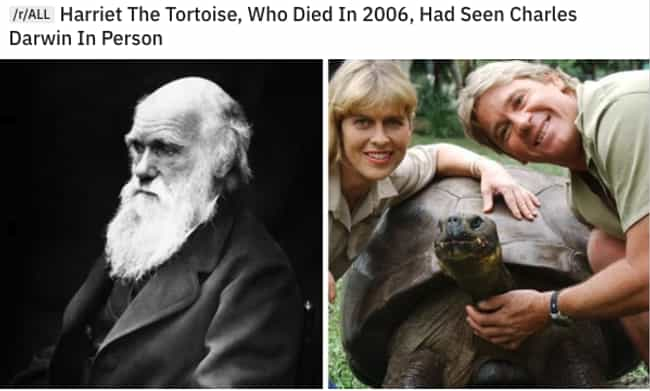 The Forrest Gump Of Tortoises is listed (or ranked) 3 on the list 21 Fascinating Images That Make Our World So Much More Interesting