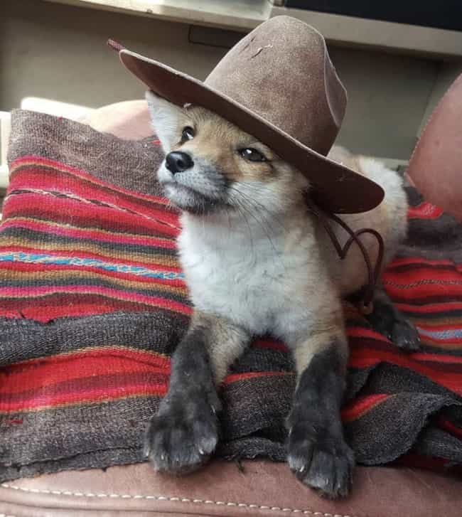 Yee Paw! is listed (or ranked) 1 on the list 20+ Adorable Pictures Of Animals In Hats (That Are Pretty Funny Too)