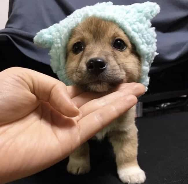 Tiny Hat For A Tiny Pup is listed (or ranked) 4 on the list 20+ Adorable Pictures Of Animals In Hats (That Are Pretty Funny Too)