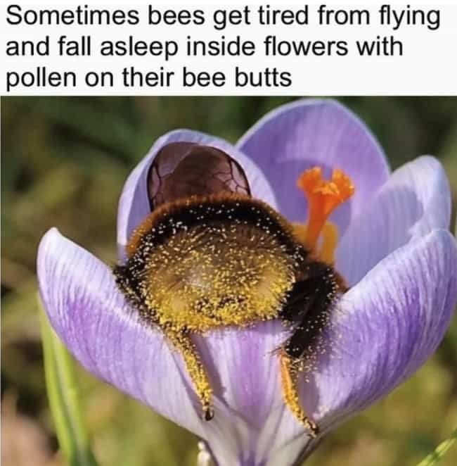 Sleepy As A Bumblebee? ... is listed (or ranked) 4 on the list 27 Funny Pictures Of Animals At Their Derpiest