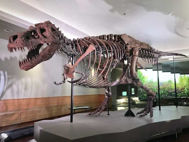 The T. Rex Had A Major G... is listed (or ranked) 4 on the list Here Are All The Craziest Dinosaur Facts That Have Been Discovered Since You Were In School